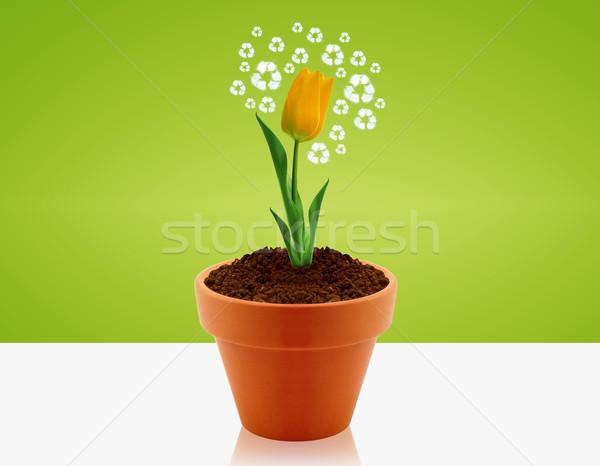 Ekolojik farkında olma sarı lâle bahçe pot Stok fotoğraf © designsstock