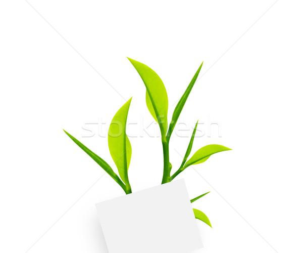 Schrijfpapier witte paperclip groene bladeren natuur Stockfoto © designsstock