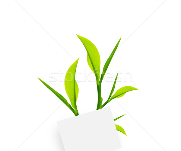 Briefpapier weiß Briefbogen Büroklammer grüne Blätter Natur Stock foto © designsstock