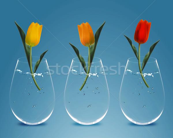 Сток-фото: три · красочный · тюльпаны · прозрачный · весны · лист