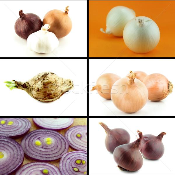 Saudável alimentos orgânicos conjunto fresco cebola natureza Foto stock © designsstock