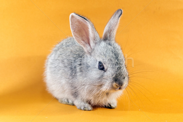 かなり ウサギ グレー オレンジ イースター 背景 ストックフォト © designsstock