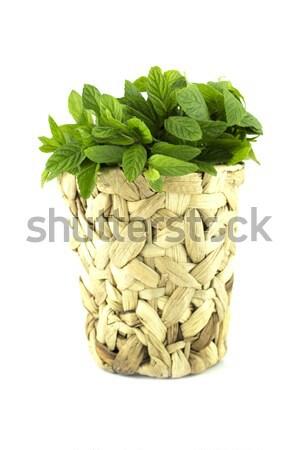 свежие мудрец листьев изолированный белый работу Сток-фото © designsstock
