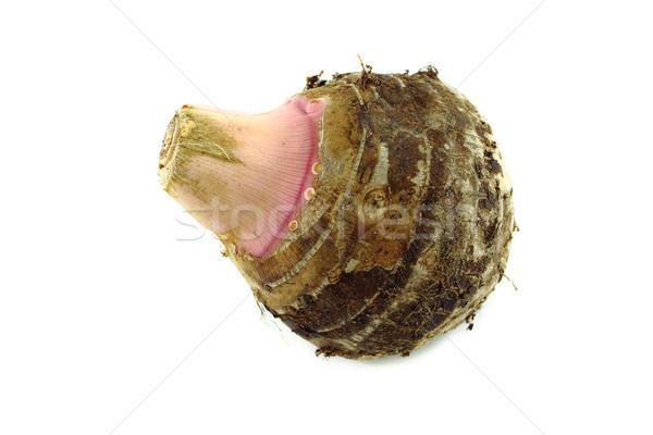 taro root or colocasia Stock photo © designsstock