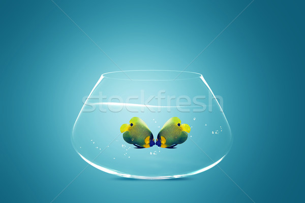 Two Angelfish falling in love Stock photo © designsstock