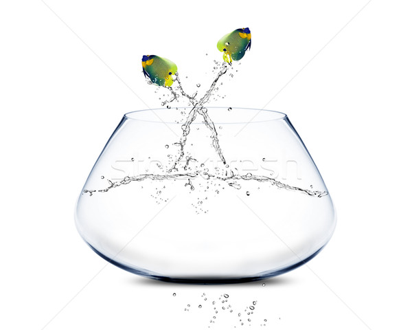 Stock photo: angelfish jumping and doing Acrobatic show