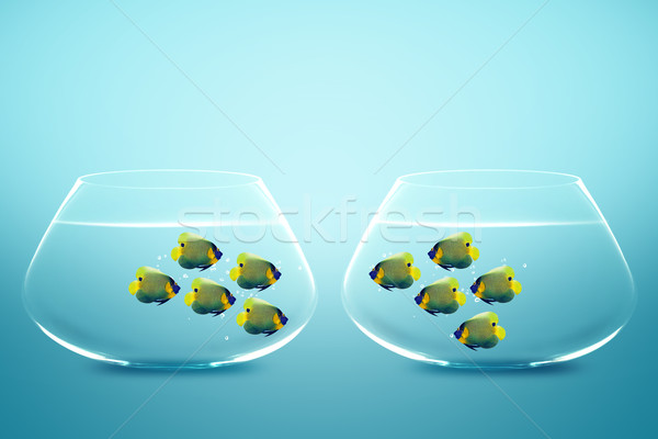 Two groups of angelfish in fishbowls  Stock photo © designsstock