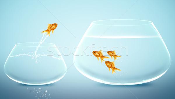 Goudvis springen groter huisdieren ontwikkeling Stockfoto © designsstock