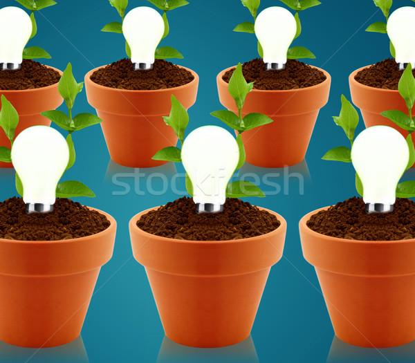 Zöld energia modern fényes villanykörte kert edény Stock fotó © designsstock