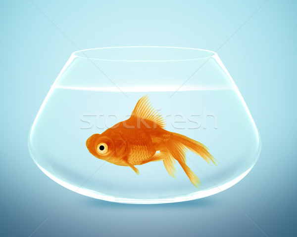 goldfish in small bowl Stock photo © designsstock