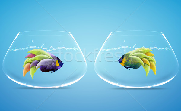 Two Angelfish in Two bowls Stock photo © designsstock