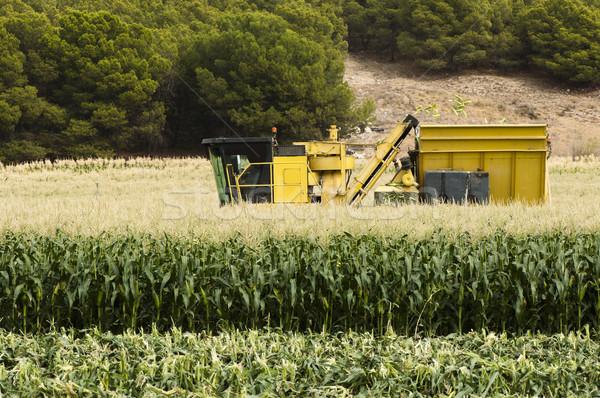 Harvester reaps corn Stock photo © deyangeorgiev