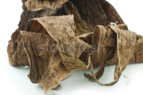 Dried tobacco leaves Stock photo © deyangeorgiev