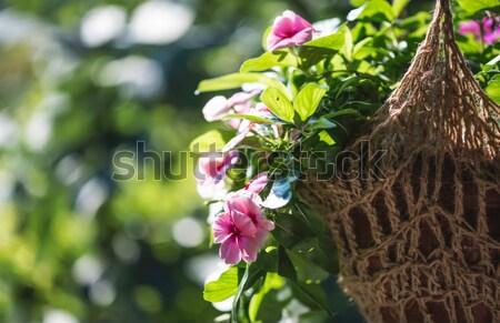 çiçekler asılı pot güneş ışıklar çiçek Stok fotoğraf © deyangeorgiev