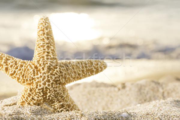 Zonsopgang strand zeester hemel zon zee Stockfoto © deyangeorgiev