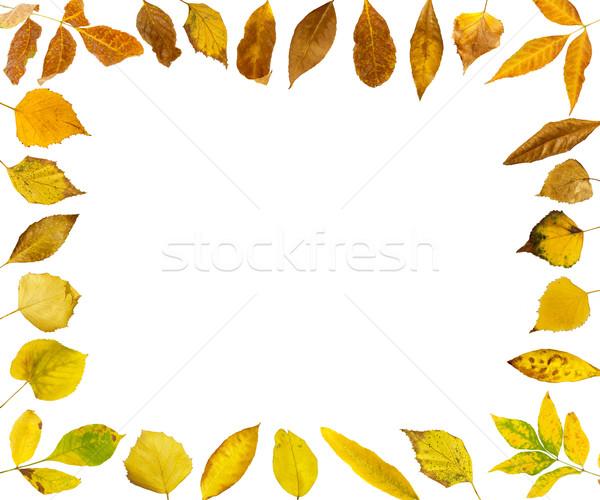 Border of autumn leaves Stock photo © deyangeorgiev