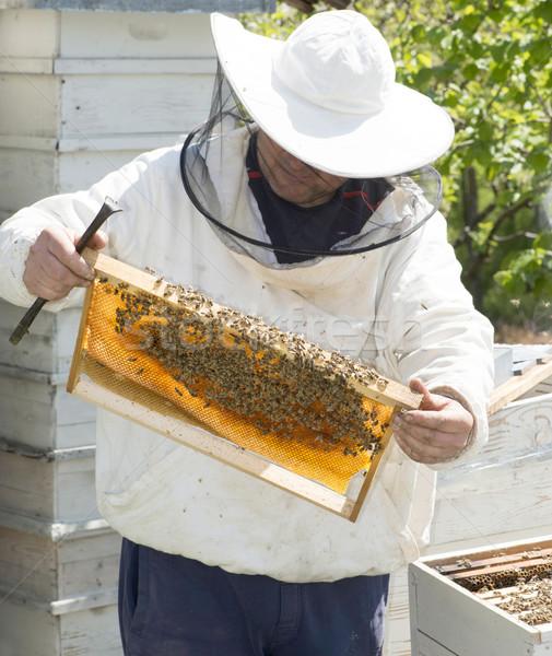 Beekeeper look honeycombs Stock photo © deyangeorgiev
