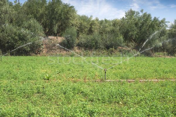Irrigation systems Stock photo © deyangeorgiev