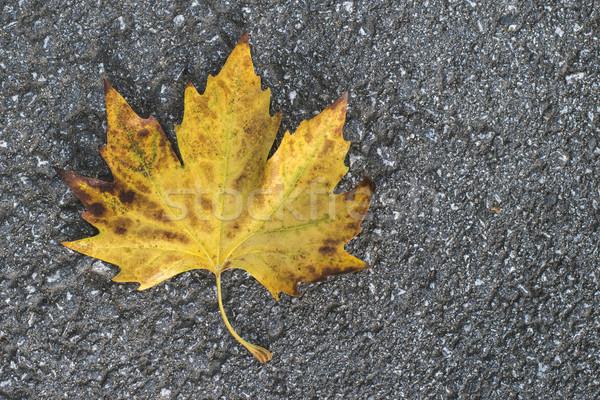 Autumn leaf on sidewalk.  Stock photo © deyangeorgiev