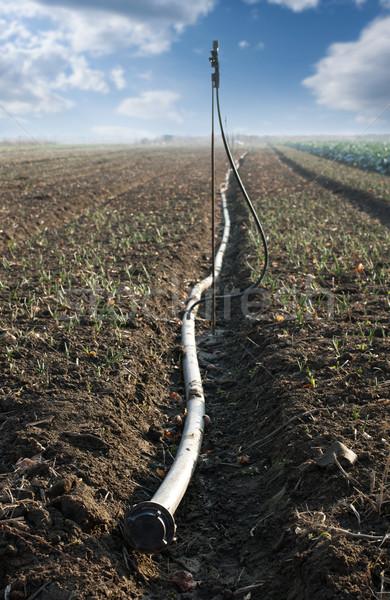 Land and hose for watering Stock photo © deyangeorgiev