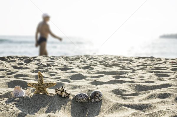 Kabukları plaj güneş ışık su yaz Stok fotoğraf © deyangeorgiev