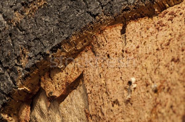 コルク 自然 作品 木材 森林 抽象的な ストックフォト © deyangeorgiev