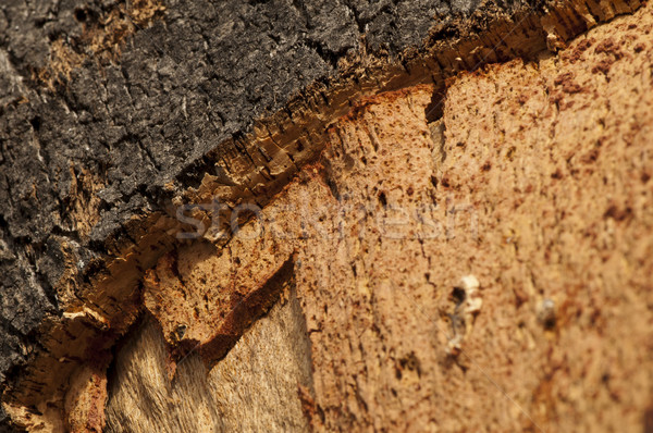 Cortiça naturalismo peça madeira floresta abstrato Foto stock © deyangeorgiev
