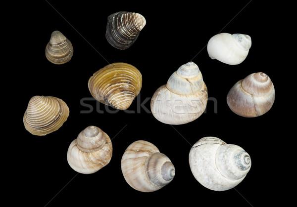 Set of sea shells black isolated Stock photo © deyangeorgiev