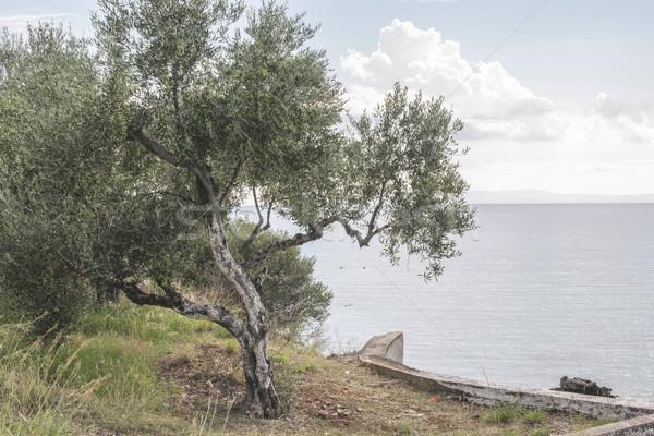 Olijfboom strand blauwe hemel Griekenland water zee Stockfoto © deyangeorgiev