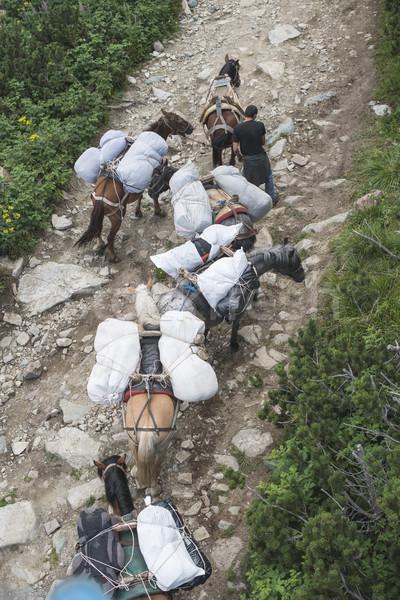 Horses laden with baggage climb the mountain Stock photo © deyangeorgiev