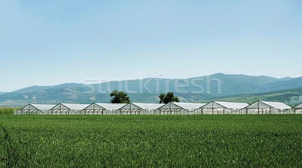 Estufa plantação cultivado terra primeiro plano comida Foto stock © deyangeorgiev