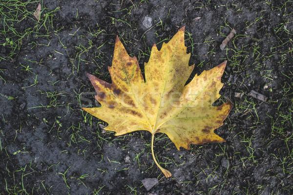 Najaar blad trottoir donkere textuur weg Stockfoto © deyangeorgiev