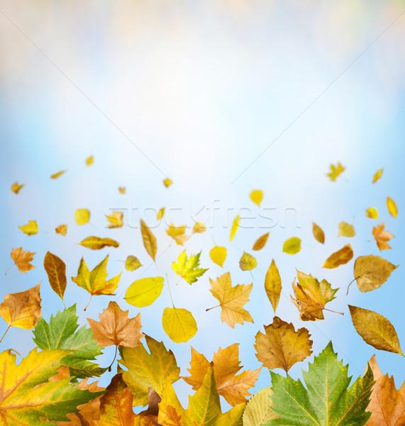 Fronteira outono céu cópia espaço textura Foto stock © deyangeorgiev