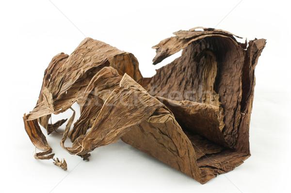 сушат табак листьев белый изолированный кубинский Сток-фото © deyangeorgiev
