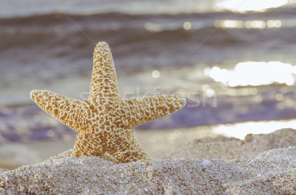 Sunrise plage starfish ciel soleil mer Photo stock © deyangeorgiev