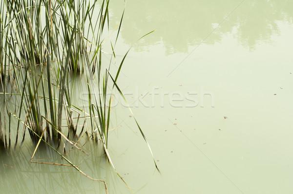 Cane in River Stock photo © deyangeorgiev