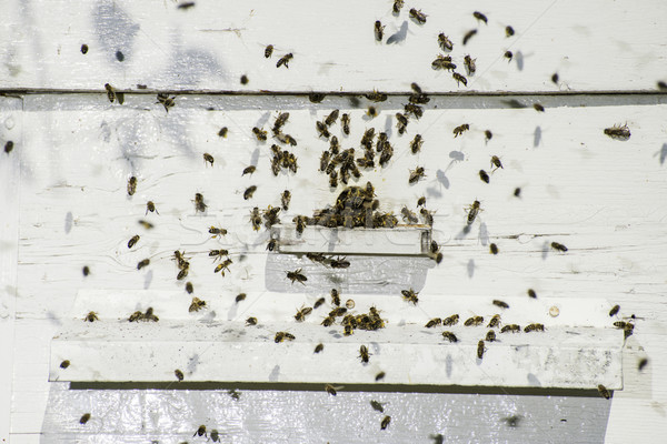 Bees entering the hive Stock photo © deyangeorgiev