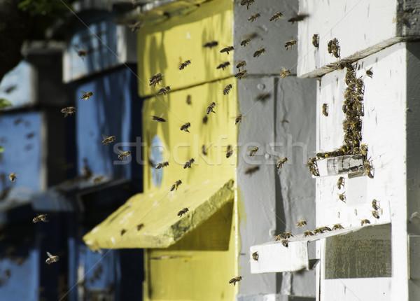 Swarm of bees fly to beehive Stock photo © deyangeorgiev