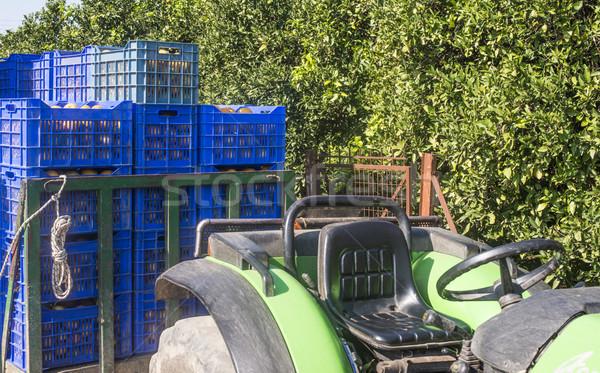 Crates with oranges Stock photo © deyangeorgiev