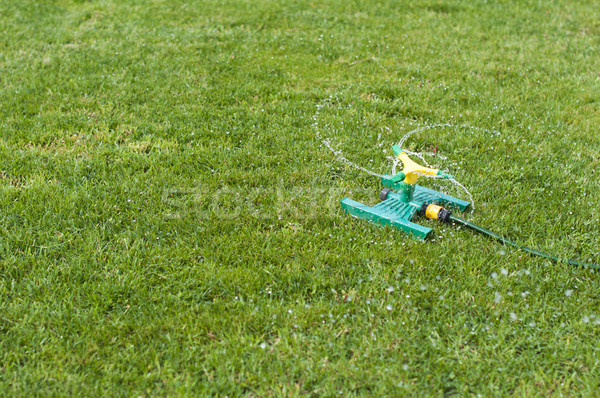 Lawn sprinkler over green grass Stock photo © deyangeorgiev