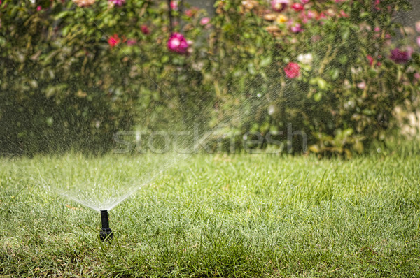 Watering the garden Stock photo © deyangeorgiev