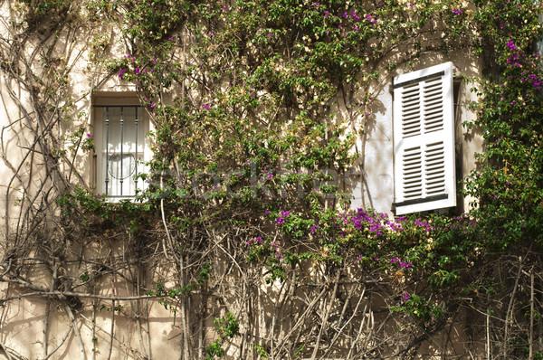 Windows muro ivy bianco verde fiore Foto d'archivio © deyangeorgiev