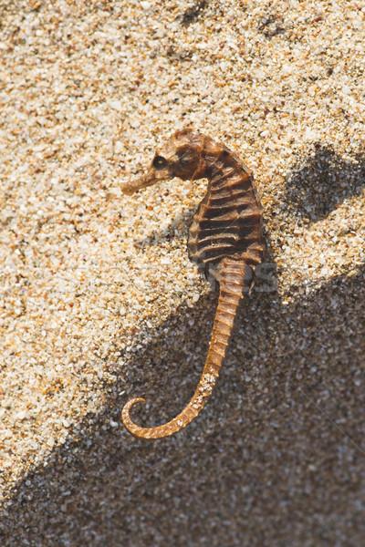 Seahorse on the beach Stock photo © deyangeorgiev