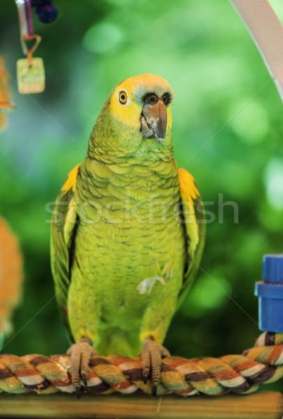 Stockfoto: Groene · papegaai · natuur · achtergrond · vogel · portret