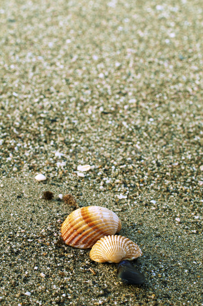 песчаный пляж снарядов пляж природы морем Сток-фото © deyangeorgiev