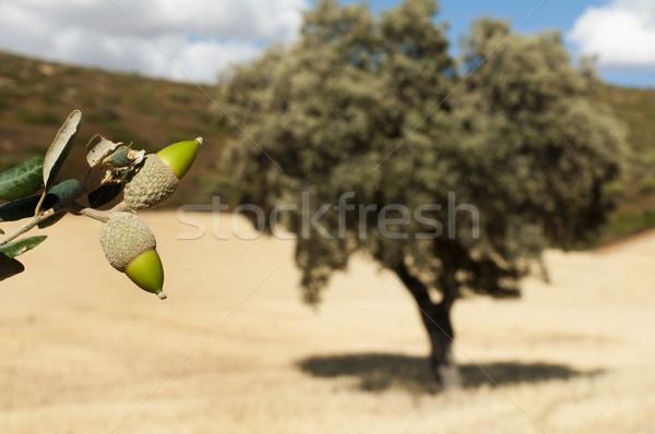 Drzewo żywności lasu krajobraz liści Zdjęcia stock © deyangeorgiev