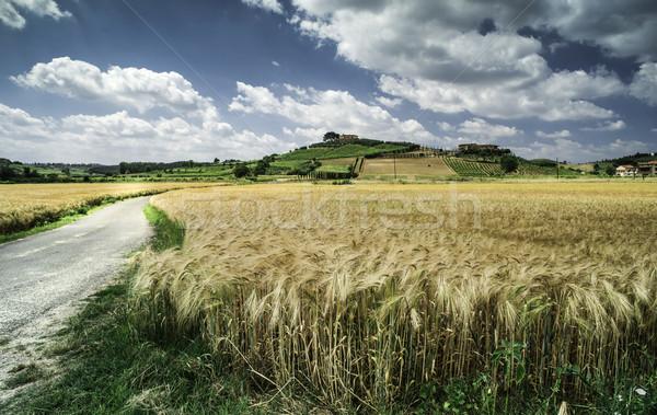 Cereal fazenda toscana Itália paisagem Foto stock © deyangeorgiev