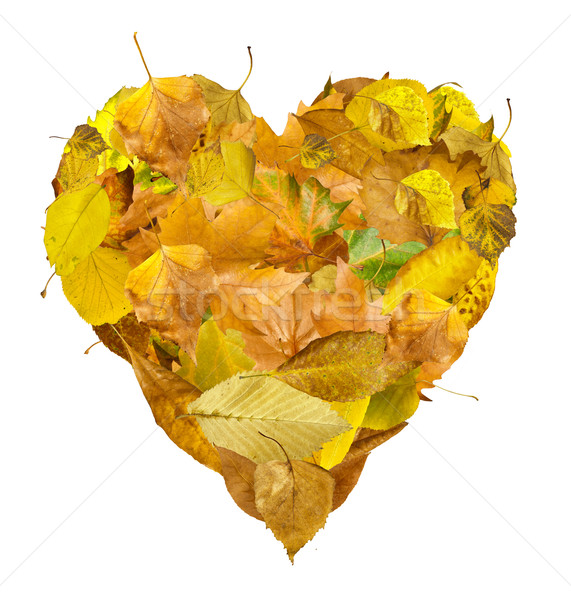 Stock photo: Heart made of autumn leaves
