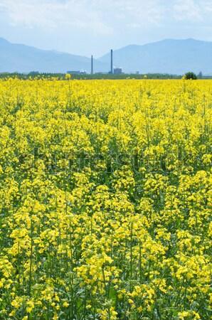 Nemi erőszak ültetvény gyár virág természet tájkép Stock fotó © deyangeorgiev