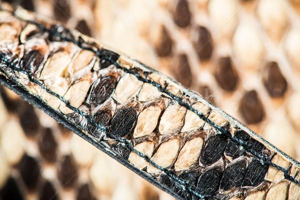 Texture of genuine snakeskin Stock photo © deyangeorgiev